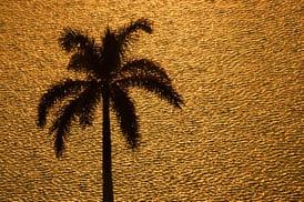 gold_palm_beach.jpg